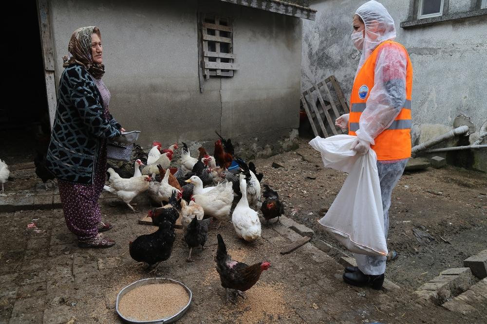 Emine teyze, tavuklarının yemi bitince belediye başkanını aradı