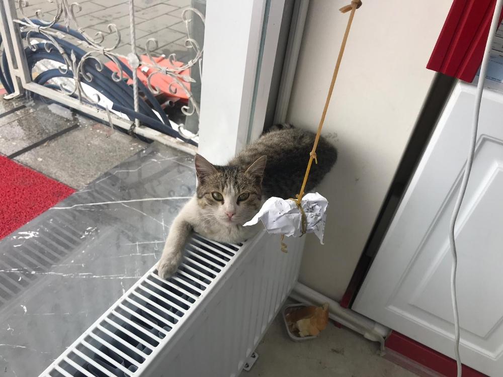 Kalorifer peteği üzerinde ısınan kedi görenleri gülümsetti