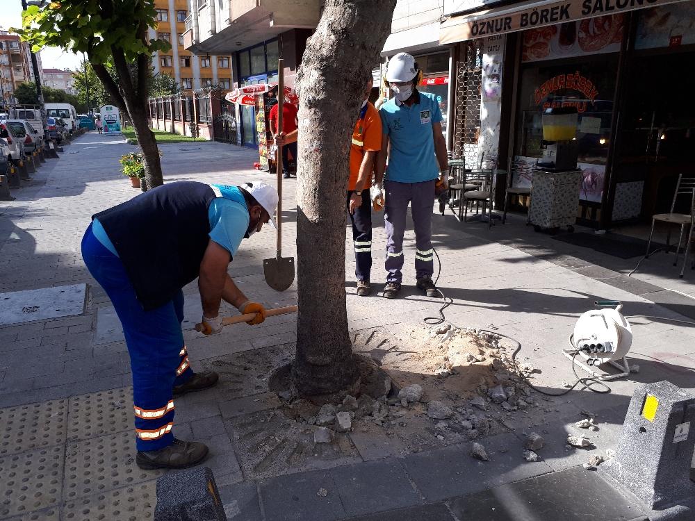 Köklerine beton dökülen ağaçlar tedavi ediliyor