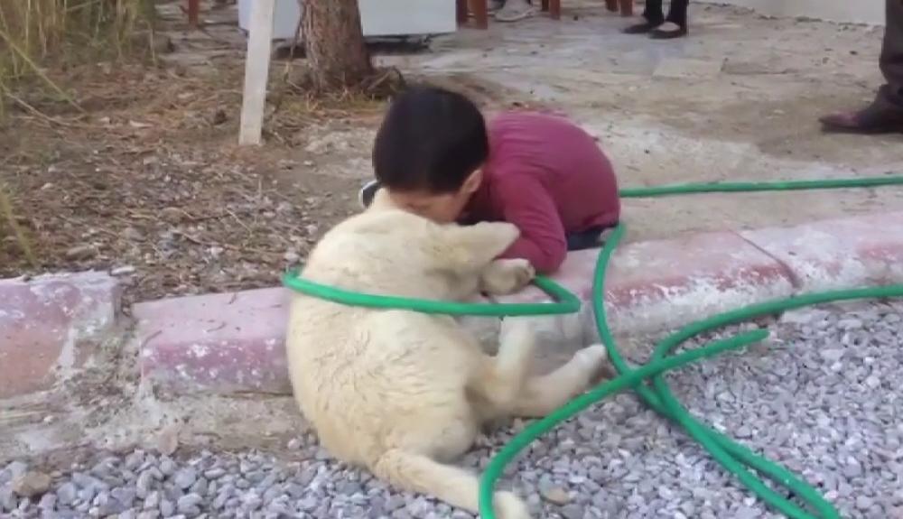Köpeği ısıran çocuk görenleri gülme krizine soktu